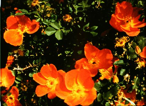 2 Marie Menken Glimpse of the Garden Light Cone